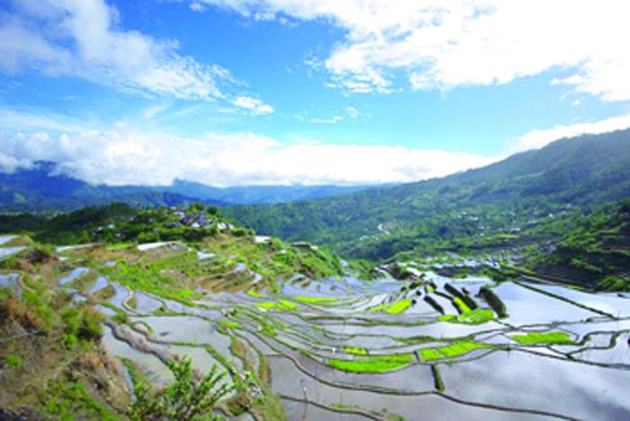 水を張り、田植えに備える田んぼ Put water and prepare for rice planting Rice field