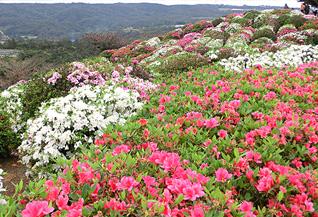 4. 沖縄県Okinawa Prefecture